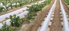 Ayudas para el apoyo a jóvenes agricultores