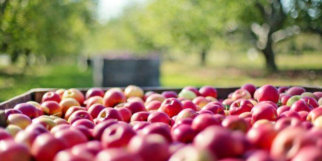 E_ NEET RURAL, práctica y capacitación agraria y ganadera para jóvenes