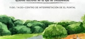 Domingo 2 de febrero. Día Mundial de los Humedales en la Ría de Villaviciosa