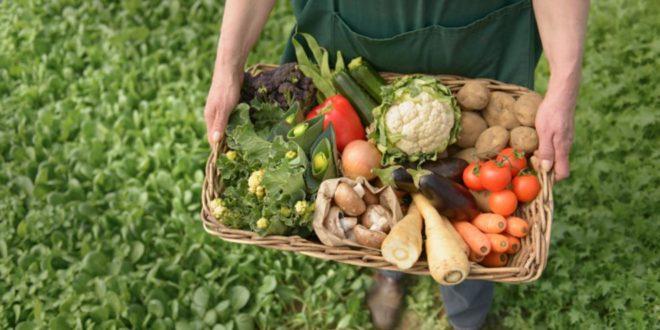 Subvenciones para comercialización de alimentos ecológicos
